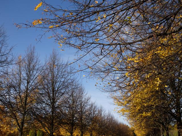 Tree walkway in Regents Park