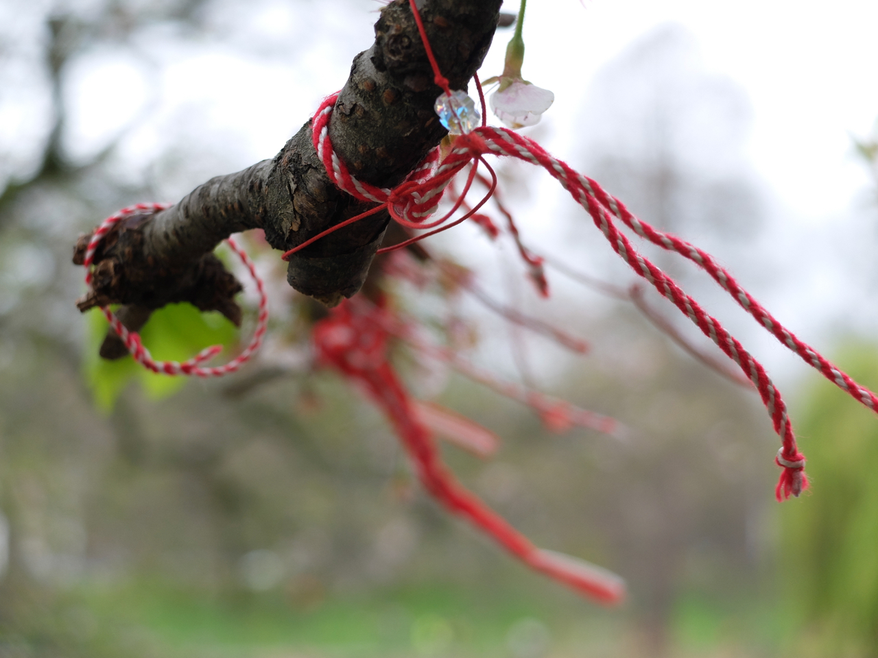 Red thread on a branch in St James Park