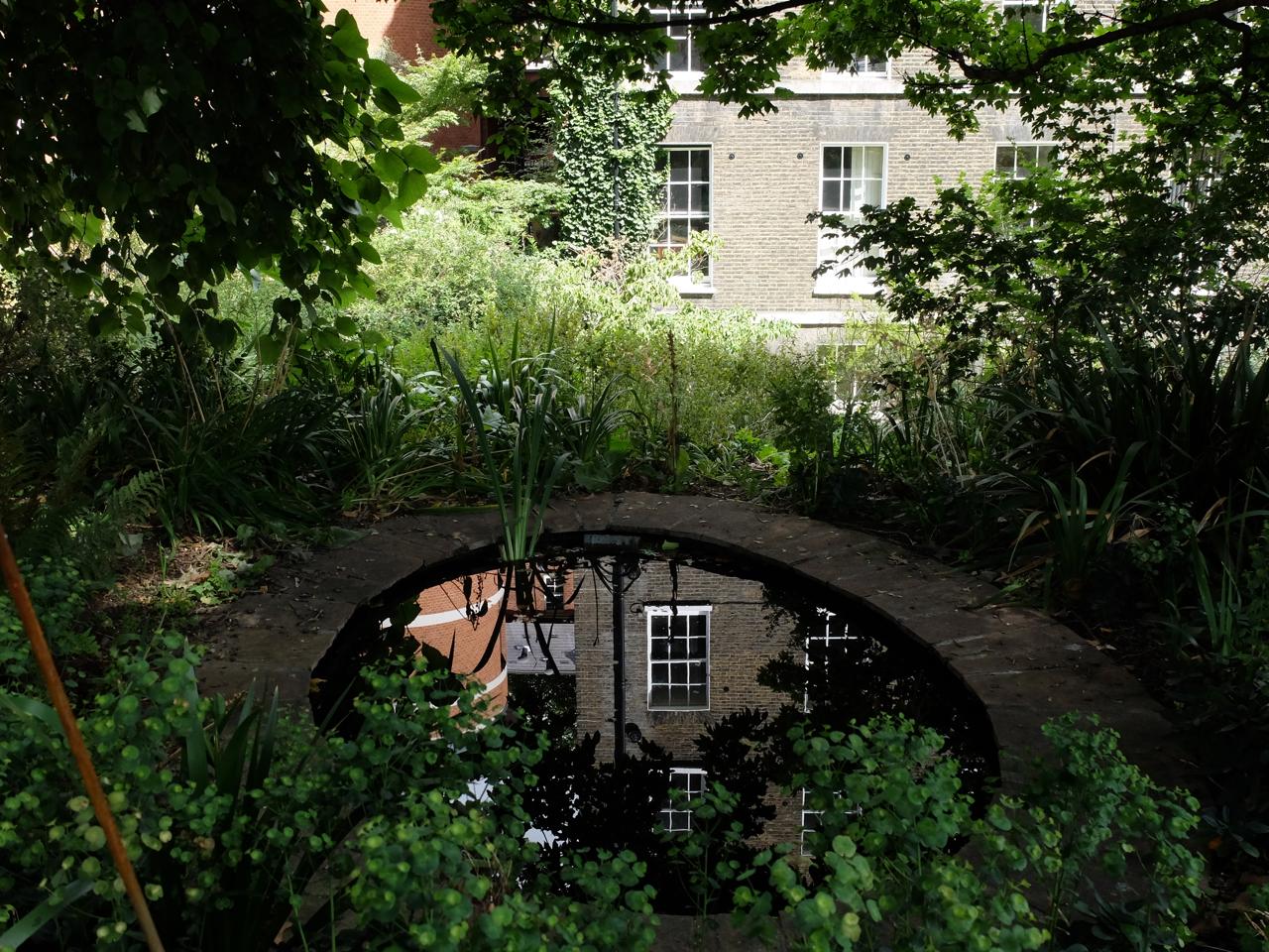 Pond and greenery in Grays Inn Walks