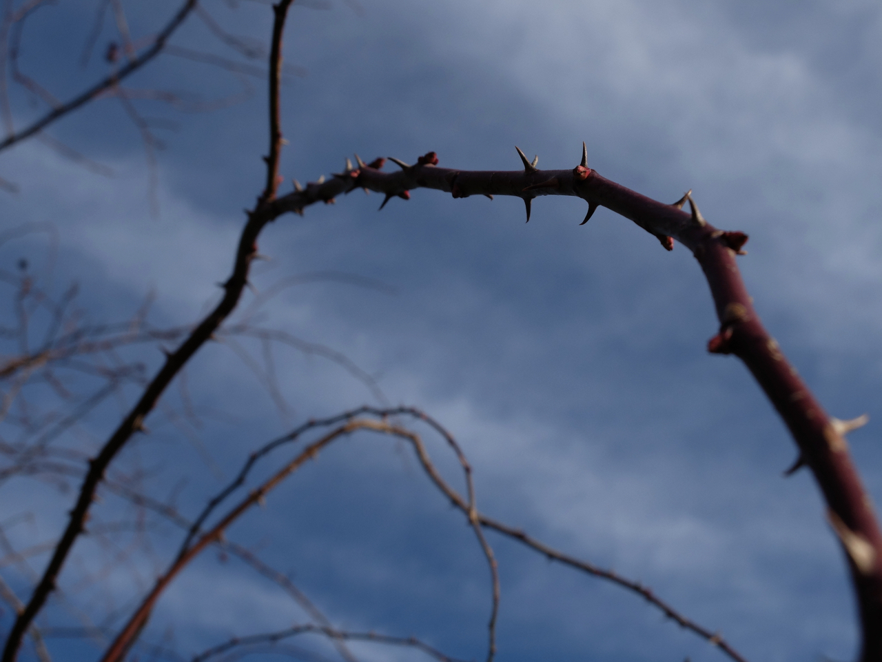 Thorns on a branch