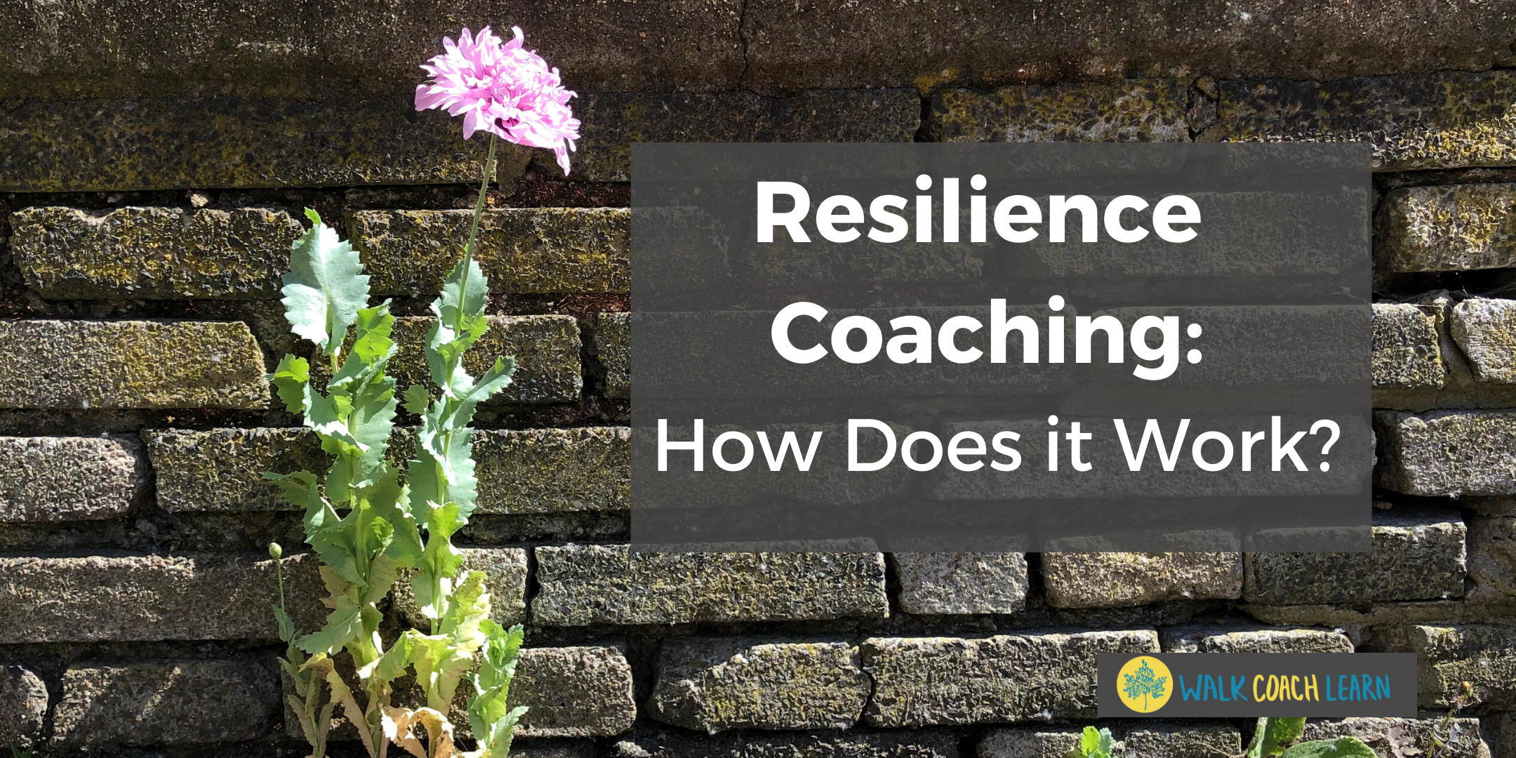 Resilience Coaching: How Does it Work?